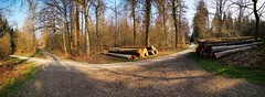 IMG_20190412_092213 (eduard43) Tags: waldwege wald trees bäume 2019 rafz