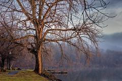 The Tree On The Hudson (Roy Manchester) Tags: blue canon catskillnewyork canonllenses 5dsr 7020028lisii ef70200f28isiiusm availablelight hudsonvalley hudsonriver trees catskill greenecounty greenecountyny upstatenewyork unitedstates