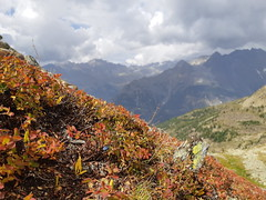 Autunno in Valpelline (supersky77) Tags: lagodiarpisson valpelline aosta valledaosta vallèedaoste alps alpi alpes alpen autumn
