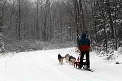 IMG_0035_AutoColor (LifeIsForEnjoying) Tags: snow mushing dog sledding dogs kaskae sitka nike
