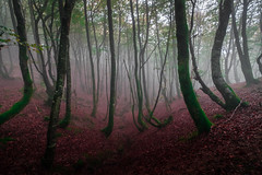 ALTUBE zarra 9 (juan luis olaeta) Tags: paisajes landscape natura fog foggy forest bosque basoa pagoa laiñoa nieblas autumn otoño udazkena photoshop lightroom altube