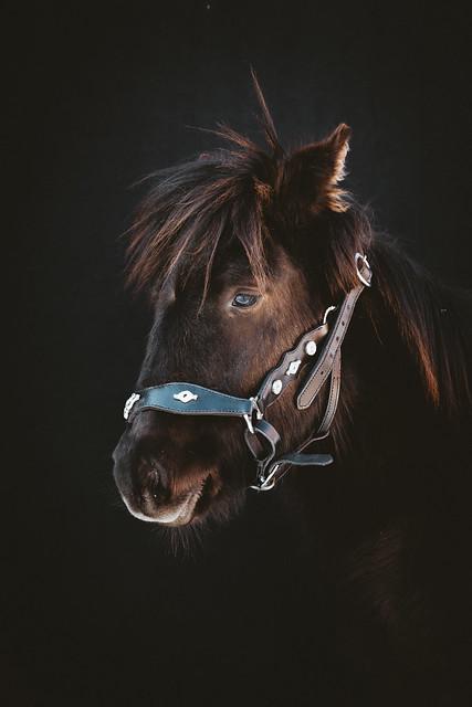 Cutest foal