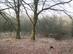 (Jeroen Hillenga) Tags: bos bomen forest forret drenthe netherlands nederland natuur nature natuurgebied natur