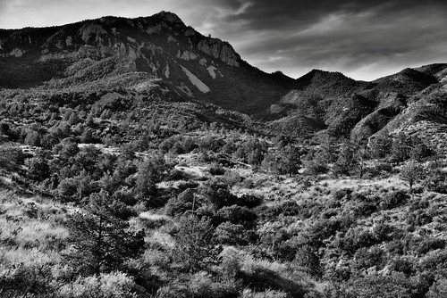 A View Across the Chisos Basin and Up a Mountainside to Emory Peak (Black & White, Big Bend National Park)