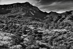 A View Across the Chisos Basin and Up a Mountainside to Emory Peak (Black & White, Big Bend National Park) (thor_mark ) Tags: nikond800e day4 triptobigbendnationalpark bigbendnationalpark windowtrail emorypeak chisosmountains lookingsouth capturenx2edited colorefexpro blackwhite silverefexpro2 intermountainwest southwestbasinsandranges transpecostexasranges bigbendranges hiketothewindow thewindowtrail desert desertlandscape desertplantlife desertmountainlandscape outside nature landscape mountains mountainsindistance mountainsoffindistance mountainside sunny blueskieswithclouds trees hillsideoftrees chihuahuandesert chisosbasin usbiospherereserve rollinghillsides volcanicpast project365 tx unitedstates