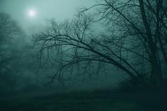 Descent (www.neilburnell.com) Tags: woodland trees eerie dark fog mysterious mist atmosphere blue moonlight