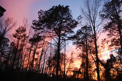 Woods With Pink And Blue Sky. (dccradio) Tags: lumberton nc northcarolina robesoncounty outdoor outdoors outside nature natural march spring springtime sunday sundayevening sundaynight evening silhouette tree trees treebranch branch branches treebranches treelimb treelimbs sky colorful colorfulsky sunset sunsetsky clouds pinkclouds bluesky nikon d40 dslr scenic woods wooded forest beauty beautiful pretty landscape