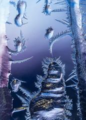 frost-1670345 (claudiaulrikegoodall) Tags: purple