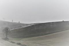 Nebbia. (Enzo Ghignoni) Tags: nebbia campi colline alberi erba