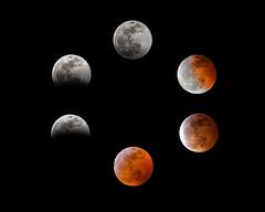 20190120_Super_Blood_Wolf_Lunar_Eclipse_02 (petamini_pix) Tags: moon fullmoon bloodmoon supermoon wolfmoon eclipse lunar lunareclipse composite totallunareclipse superbloodwolfmoon night nightphotography astronomy red montage