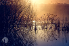 Shrub (warmianaturalnie) Tags: nature sunset tree sunlight landscape outdoors sun silhouette sunrise dawn morning reflection backlit scenics fog tranquilscene beautyinnature warmia warmianaturalnie chaszcze krzaki thicket shrub bush