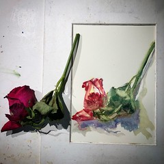 Day 1316. The #rose #painting for today. #watercolour #watercolourakolamble #sketching #stilllife #flower #art #fabrianoartistico #hotpress #paper #dailyproject (akolamble) Tags: rose painting watercolour watercolourakolamble sketching stilllife flower art fabrianoartistico hotpress paper dailyproject