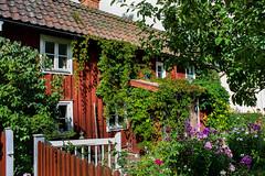 IMG_2769-1 (Andre56154) Tags: schweden sweden sverige haus house holzhaus gebäude building garten garden