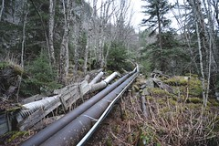 (i threw a guitar at him.) Tags: alaska skagway march 2019 walk hike infrastructure hydroelectric pipes water hydro electricity apt power telephone mountain side moss green woods forest klondike national park exploring urbex uphill creative commons history energy