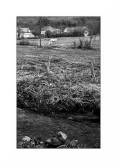 Le Morvan (Punkrocker*) Tags: nikon s2 rf rangefinder nikkor 50mm 5014 sc film kodak tmax 400 nb bwfp monochrome paysage landscape horse cheval morvan bourgogne france