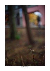 2019/3/3 - 12/15 photo by shin ikegami. - SONY ILCE‑7M2 / Voigtlander NOKTON CLASSIC 40mm f1.4 SC VM (shin ikegami) Tags: asia sony ilce7m2 sonyilce7m2 s7ii 40mm voigtlander nokton nokton40mmf14sc tokyo photo photographer 単焦点 iso800 ndfilter light shadow 自然 nature 玉ボケ bokeh depthoffield naturephotography art photography japan earth