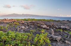 Moloka'i (Austin Westervelt) Tags: hawaii maui landscape seascape island beautiful light sunrise sun sunlight rocky rocks water ocean sea clouds sky colorful plants