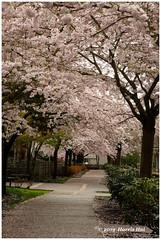 Hear The Steps Of Spring Walking Away - Terra Nova XT6712e (Harris Hui (in search of light)) Tags: harrishui fujixt1 digitalmirrorlesscamera fuji fujifilm vancouver richmond bc canada vancouverdslrshooter mirrorless fujixambassador xt1 fujixcamera fujixseries fujix fujixf60mmf24 fujiprimelens fixedlens