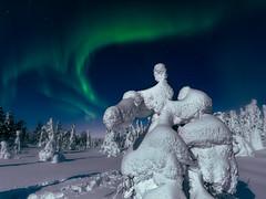 Dance (Andrei Baskevich) Tags: aurora auroraborealis northernlight winter night frost trees snow russia kandalaksha