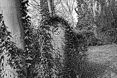 General Cemetery  Monochrome (brianarchie65) Tags: generalcemetery cemeteries hull graves grave geotagged brianarchie65 trees bushes undergrowth springbankwest kingstonuponhull ngc headstones brokenheadstones grass roots