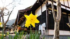 DSC01348 (Neo 's snapshots of life) Tags: japan 日本 京都 kyoto amanohashidate 天橋立 あまのはしだて sony a73 a7m3 24105 伊根