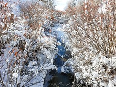Winter Wonderland. (SteBow Photography) Tags: samsung samsungnote9 colorado coloradophotography photograph photography beautiful snow winter