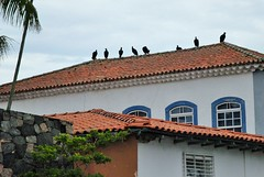 São Sebastião, Brésil. (Claudia Sc.) Tags: brésil brasil brazil sãosebastião oiseau vautour animal maison