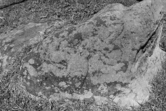 IMG_8339 (jaglazier) Tags: 121318 16thcentury18thcentury 16thcenturyad18thcenturyad 2018 animist chile crafts december easterisland grass images makemake petroglyphs plants polynesian ranokau rapanui rockart stoneworking volcanos art birdmen copyright2018jamesaglazier idols reliefs religion rituals sculpture tuff volcanicrock valparaisoregion