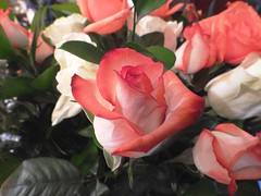 5358ex  very very Valentine (jjjj56cp) Tags: flowers roses bouquet closeup white pink coral red blossoms blooms valentine valentinesday love sweetie p1000 coolpixp1000 nikoncoolpixp1000 jennypansing