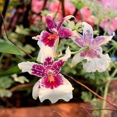 107. Arboretum flower shower (Misty Garrick) Tags: arboretum universityofminnesotalandscapearboretum landscapearboretum flowershow