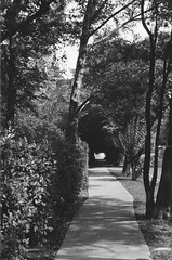 Footpath (Matthew Paul Argall) Tags: beirettevsn 35mmfilm blackandwhite blackandwhitefilm kentmere100 100isofilm footpath path