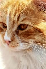 Photogenic (Zohaib Usman (2M+ Thanks)) Tags: cat cats catslovers catlovers catsandpets petsandanimals loveofcats catphoto kitty hellokitty catsandkittens cutekitty catcloseup zohaibusmanphotography