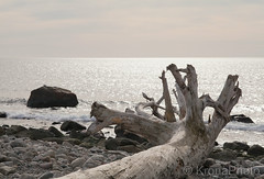 After the storm, Mølen, Norway (KronaPhoto) Tags: natur water sea ocean norway mølen vestfold stones tre tree old aged storm calm rest leftover nature dof waves windy shapes