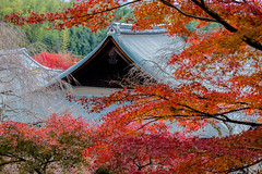Nestled (johnshlau) Tags: nestled serenity peace solemnity elegance tenryujitemple 天龍寺 tenryuji architecture gardens autumncolors autumn colors redleaves red leaves zentemple zen temple worldheritagesite heritage arashiyamadistrict 嵯峨野 嵐山 arashiyama kyoto japan nature