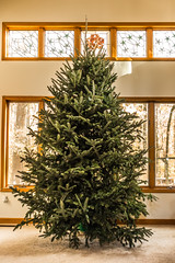 live christmas tree decorated for holidays (DigiDreamGrafix.com) Tags: christmas decorations newyear christmaseve festive greeting happy holiday xmas merry christmastime firtree toys presents bauble santa owl fun tradition green empty decor 12foot tall livingroom home space