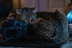 Photogenic Tabby (Christy Turner Photography) Tags: christyturnerphotography cats kitty meow feline tabby nikon gatto cat