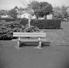 Alone1 (Phil John (Swansea)) Tags: zeissikon fomapan100 ilfosol3 homedeveloped swansea victoriapark alone seat mediumformat 6x6 group6x6 120film nettar
