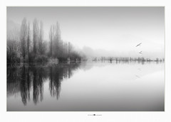 winter solstice (paolo paccagnella) Tags: phpph© monochrome minimal masterclass photo foto flickr blackandwhite bw bn biancoenero minimalism ass acqua ambiente veneto valle landscape lake fog paccagnellapaolo 2018