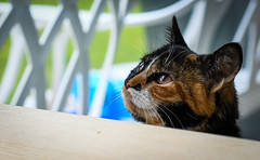 2018_361 (Chilanga Cement) Tags: nikon nikond850 nik cat catsofflickr cats kitty feline whiskers whisker kitchen