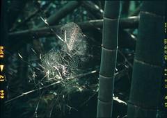 Take spiderweb (WilliamJosephJefferson) Tags: provia100f pentax80~160 pentax645 film analog art
