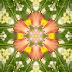 Kaleido Abstract 1876 (Lostash) Tags: art abstract edited nature patterns symmetry kaleidoscopes