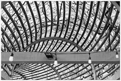 2019/010: Overhead (Rex Block) Tags: overhead nikon d750 dslr 50mm f18g monochrome bw virginia arlington crystalcity trellis bare winter project365 365the2019edition 3652019 day10365 10jan19