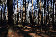 Shadowy place (Vox Sciurorum) Tags: trail trees lincoln massachusetts canon2470