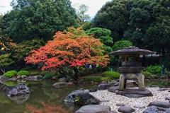 Kyu Furukawa Gardens (r0yc3) Tags: kyu furukawa gardens nishigahara kita tokyo flowers autumn koyo