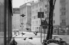 Black on White (suzanne~) Tags: bird snow street city blackandwhite bw munich bavaria germany snowinthecity bike bicycle lensbaby sol45