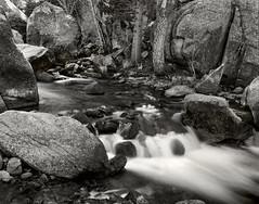 Sierra Winter Runoff, Bishop Creek (fotographis) Tags: blackwhite blackandwhite linhof linhoftechnika 125mmfujinonw fuji fujiacros 4x5 largeformat bishopca sierramountains bishopcreek creek stream water flow waterfall