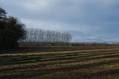 A winter walk from Faversham to Boughton-under-Blean. (favmark1) Tags: walk winter boughtonunderblean faversham kent field