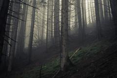 Diagonal Verticality (Netsrak) Tags: at alpen alps baum berg eu europa europe landschaft natur nebel wald fog landscape mist mountain nature woods bäume kleinwalsertal