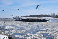 Winter 2018 (sabine1955) Tags: elbe winter schiff eis eisschollen ship icefloes fluss river möwenhimmel sky seagull day cloudy geesthacht natur
