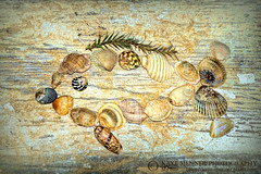 Shell Fish 2 by Kaye Menner (Kaye Menner) Tags: shellfish shellfishart fishofshells fish shells seashells stilllife stilllifefish stilllifeshells art artistic artisticfish arty artyfish photography kayemennerphotography kayemenner marine tropical tropicalstilllife tropicalshells sand beachstyle grungebackground textured texturedbackground cones coneshells pippies shellvariety patterns shellpatterns kayemennershells marineart seashoreart beachart tropicalart yellow white zen